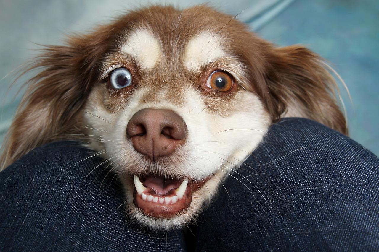 Penser à l'hygiène de votre chien pour le garder en bonne santé.
