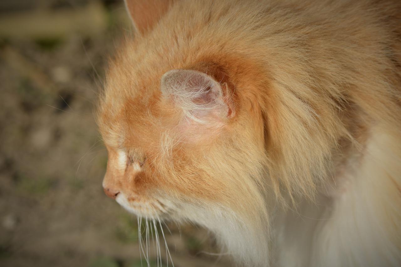 Un pelage de rêve pour votre chat : comment faire ?